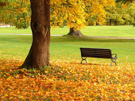 central: Bench and oak in city park in the autumn