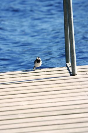 Little bird sits on a pier about lake photo