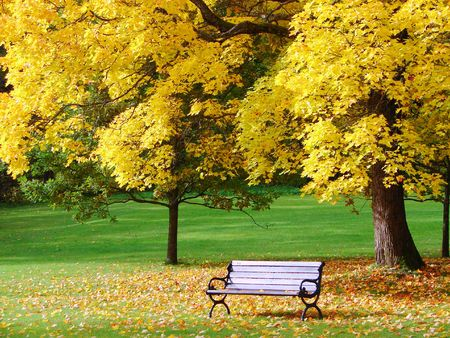 Bench and maple in city park in the autumn Stock Photo