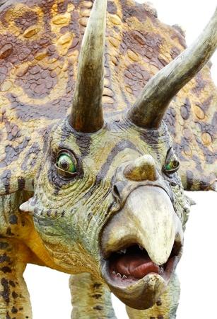 Triceratops dinosaur, isolated on white photo
