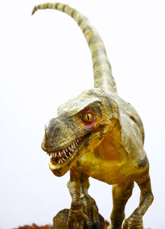 ancient creature: Ornitholestes dinosaur on white