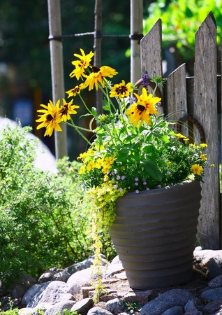Yellow flowers in a grey stone pot  against  a wooden fence photo