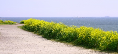 Panorama View Of Finland Gulf with yellow flowers in the foreground, Suomenlinna Sveaborg Helsinki photo