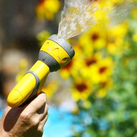 irrigate: Watering Flowers