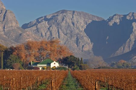 homestead: Landscape of vineyards and homestead, Cape town area, South Africa