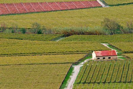 Autumn landscape of vineyards, Cape town area, South Africa photo
