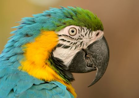 Portrait of a brightly colored Macaw