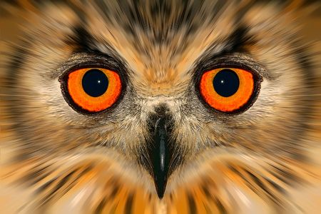 enhanced: Digitally enhanced portrait of an owl