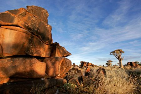 Desert landscape at sunrise with granite rocks and a quiver tree (Aloe dichotoma), Namibia Stock Photo - 522559