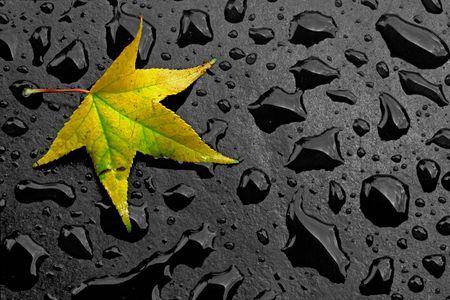 Yellow autumn leaf lying among raindrops photo