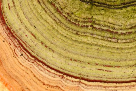 fungoid: Close-up view of a tree fungus showing abstract patterns and colors Stock Photo