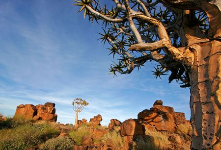 Desert landscape at sunrise with granite rocks and a quiver tree (Aloe dichotoma), Namibia Stock Photo - 641531