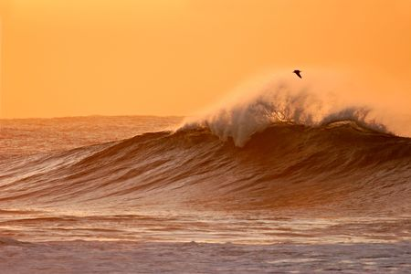 Seascape at sunset with large waves and a seagull photo