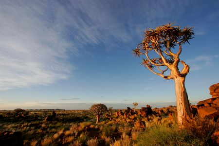 quiver: Woestijnlandschap bij zonsopkomst met granieten rotsen en een quiver boom (Aloe dichotoma), Namibië Stockfoto