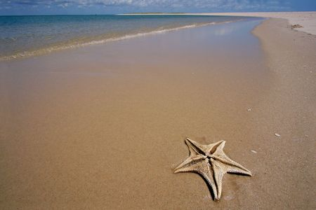 Scenic tropical beach with starfish in the foreground Stock Photo - 856733