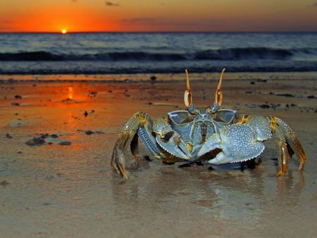 Mozambique: Ghost crab (Ocypode sp.) on the beach at sunset, Mozambique, southern Africa  Stock Photo