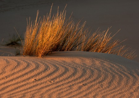 Desert grasses on textured sand dune in late afternoon light, South Africa Stock Photo - 1439237