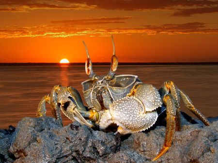 Mozambique: Ghost crab (Ocypode spp.) on coastal rocks against a red sunset, Mozambique Stock Photo