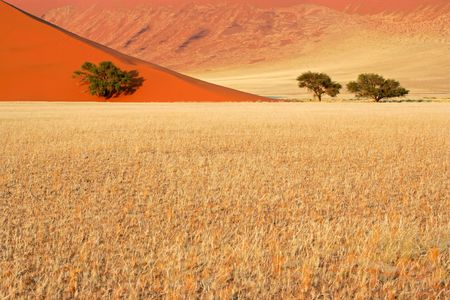 namibia: Landscape with desert grasses, red sand dune and African Acacia trees, Sossusvlei, Namibia, southern Africa LANG_EVOIMAGES