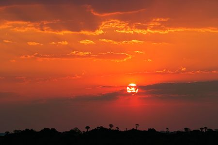 Desert sunset with silhouettes of quiver trees on the horizon, Namibia, southern Africa photo
