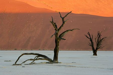 sossusvlei: Dead Acacia tree against a red sand dune, Sossusvlei, Namibia, southern Africa