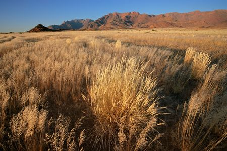 Grassland landscape at sunrise, Brandberg mountain, Namibia, southern Africa photo
