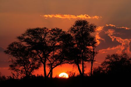 silhouetted: Sunset with silhouetted African savanna trees, Kruger National park, South Africa Stock Photo