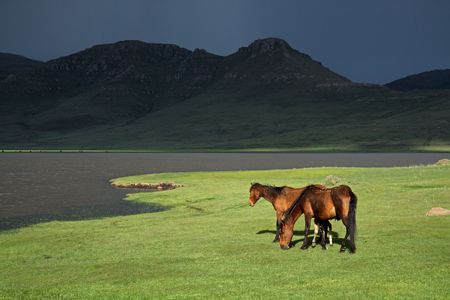 lesotho: Wild horses in the high Maluti mountains of Lesotho, southern Africa Stock Photo