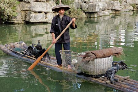 guilin: Yangshuo, Guangxi region, China, June 21, 2008 - Chinese man fishing with cormorant birds - a traditional fishing method in which fishermen use trained cormorants to fish