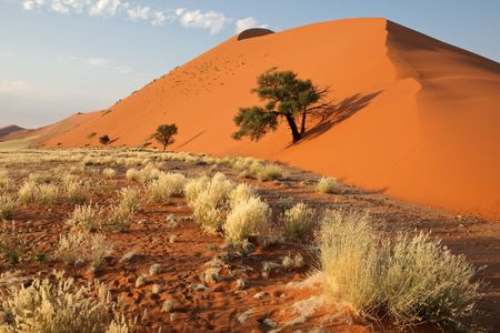 Landscape with desert grasses, red sand dune and African Acacia trees, Sossusvlei, Namibia, southern Africa photo