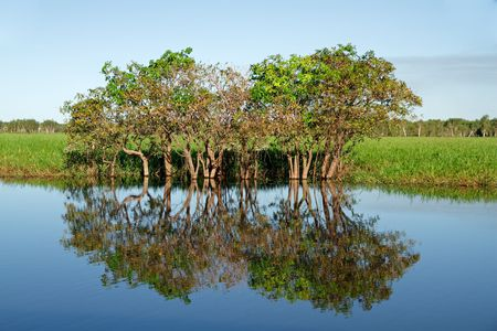 Trees with reflections, Yellow water billabong, Kakadu National Park, Northern Territory, Australia photo