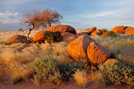 natural vegetation: Landscape with granite boulders, trees and blue sky, Namibia, southern Africa