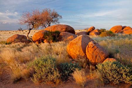 plantas del desierto: Paisaje con cantos rodados de granito, �rboles y cielo azul, Namibia, Africa del sur
