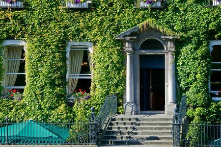 Windows of an Irish building surrounded by creeping ivy plants Stock Photo - 8036528