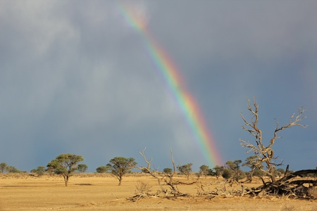 kalahari: Desert landscape with a colorful rainbow and heavy rain clouds, Kalahari, South Africa