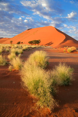 namibia: Desert landscape with grasses and red sand dunes, Sossusvlei, Namibia LANG_EVOIMAGES