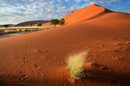 Desert landscape with red sand dunes and grass, Sossusvlei, Namibia