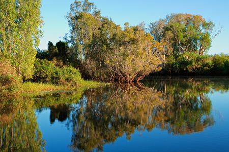 Trees with reflections, Yellow water billabong, Kakadu National Park, Australia photo