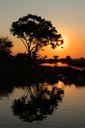African landscape with an tree reflected in water at sunset, Kwando river, Namibia Imagens