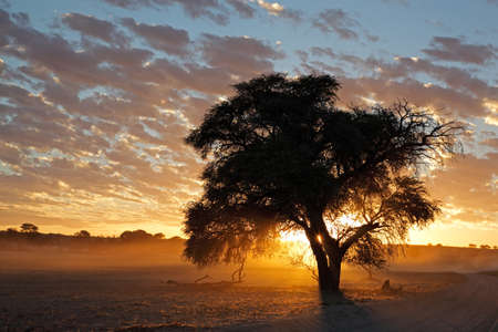 Sunset with silhouetted tree and dust, Kalahari desert, South Africa