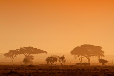 zebra: Puesta del sol africana con los árboles y las cebras silueteados, Parque Nacional de Amboseli, Kenia Foto de archivo