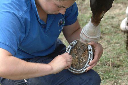 showboat: Horse Hoof Stock Photo