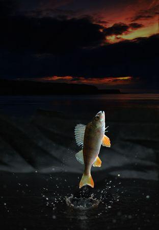 Fish Jump photo