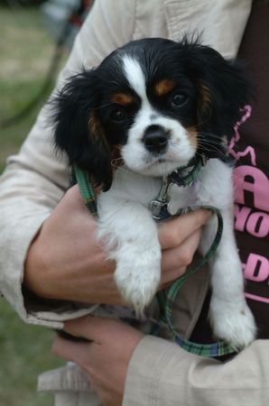 alsation: Puppy Love