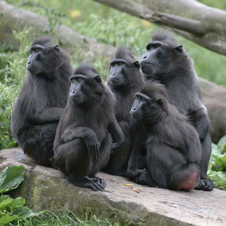 Bewildered Macaques Stock Photo