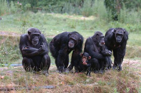 antics: Monkey on the left gives the finger Stock Photo