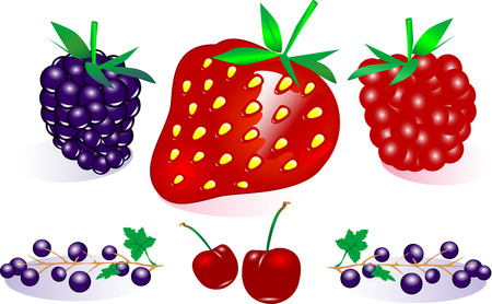 Vector Berry Collection (Fully resizable and editable) Stock Vector - 2986786