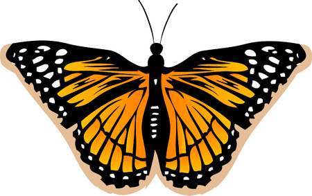 Butterfly Vector Stock Vector - 2986698