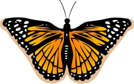 Butterfly Vector Stock Vector - 2986698