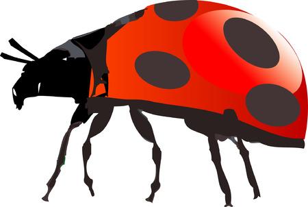 wet flies: Ladybird Illustration